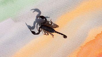 Raz Degan punto da scorpione