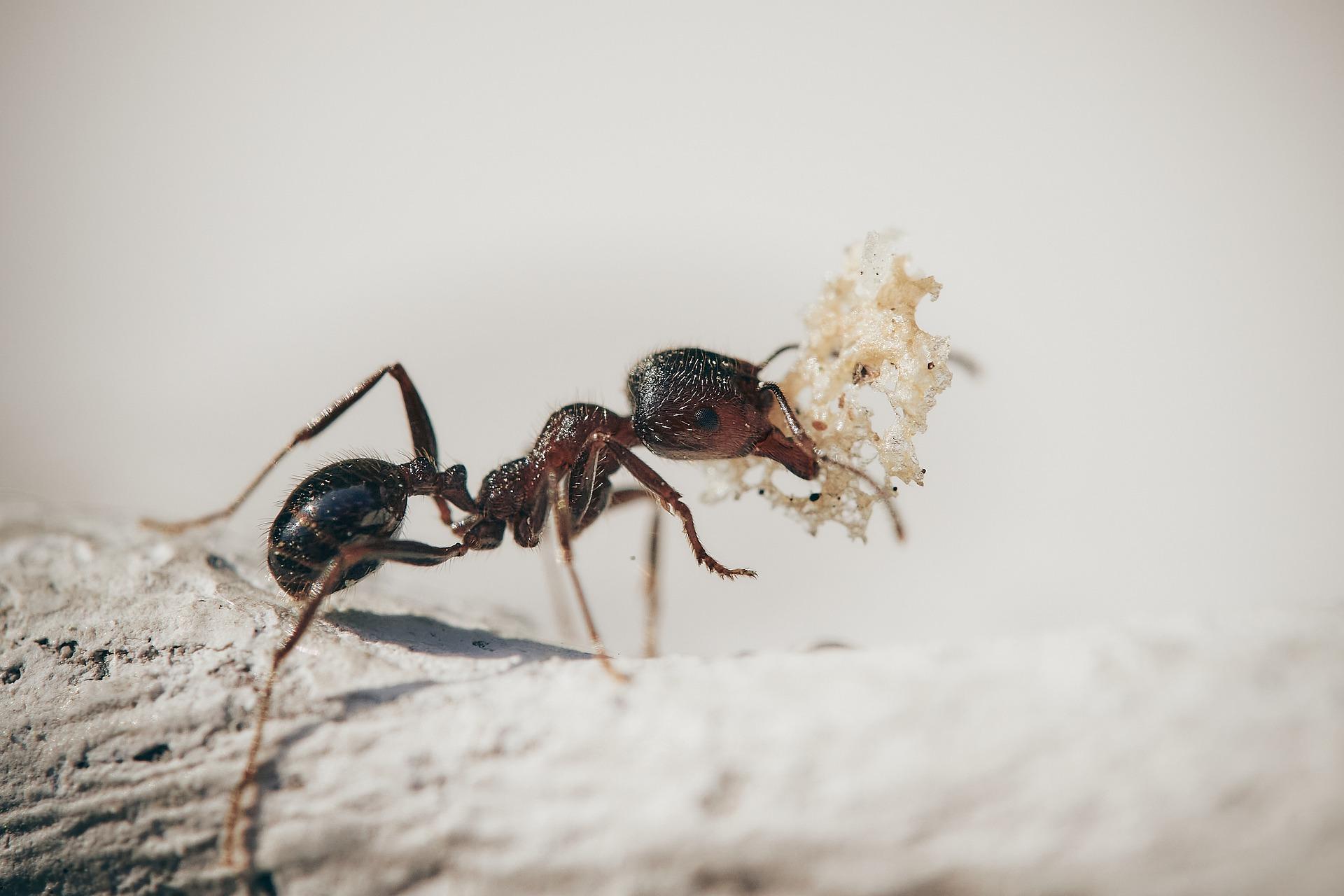 2 ants-5061910_1920 (1)